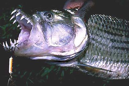 ООН призывает есть рыбьи головы