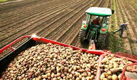Латвийские фермеры не получат компенсаций от ЕС