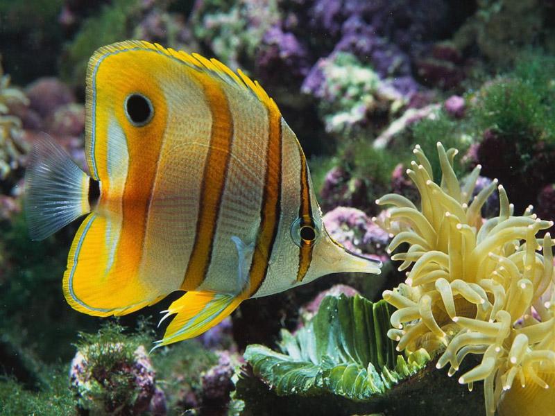 В Англии прооперирована аквариумная рыбка