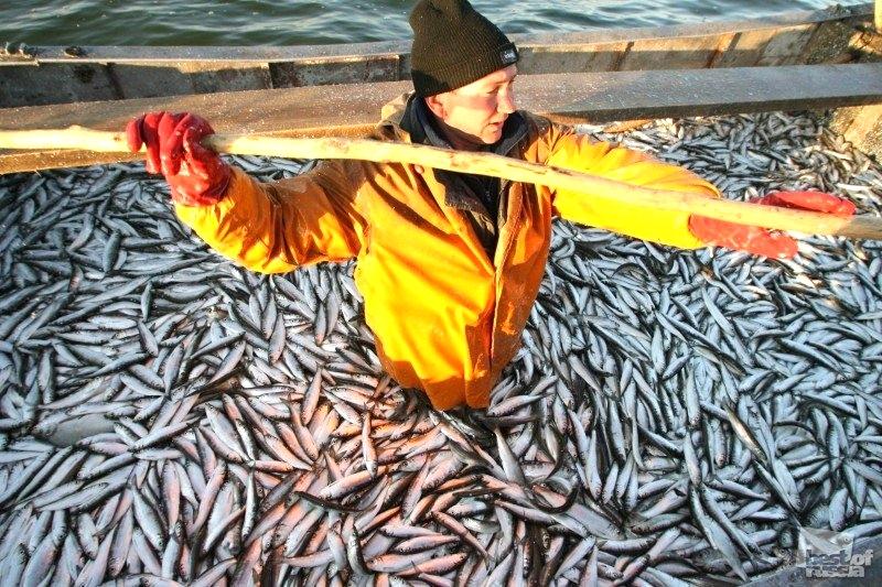 Министры сельского хозяйства ЕС обсудят проблемы рыболовства и эмбарго РФ