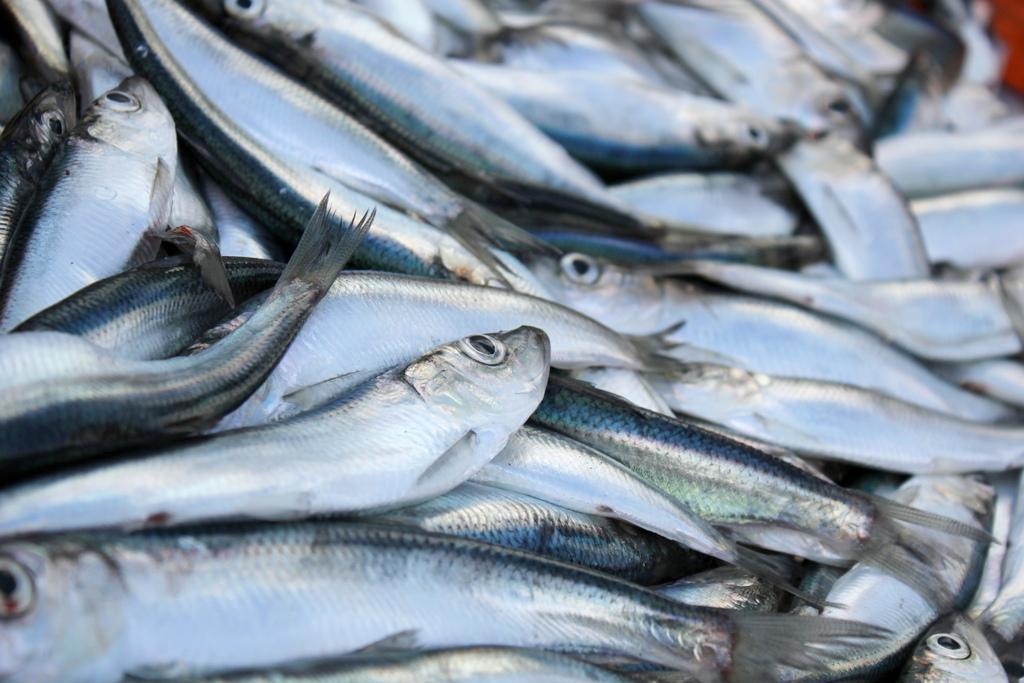 Латвии удалось добиться выгодных квот на вылов рыбы