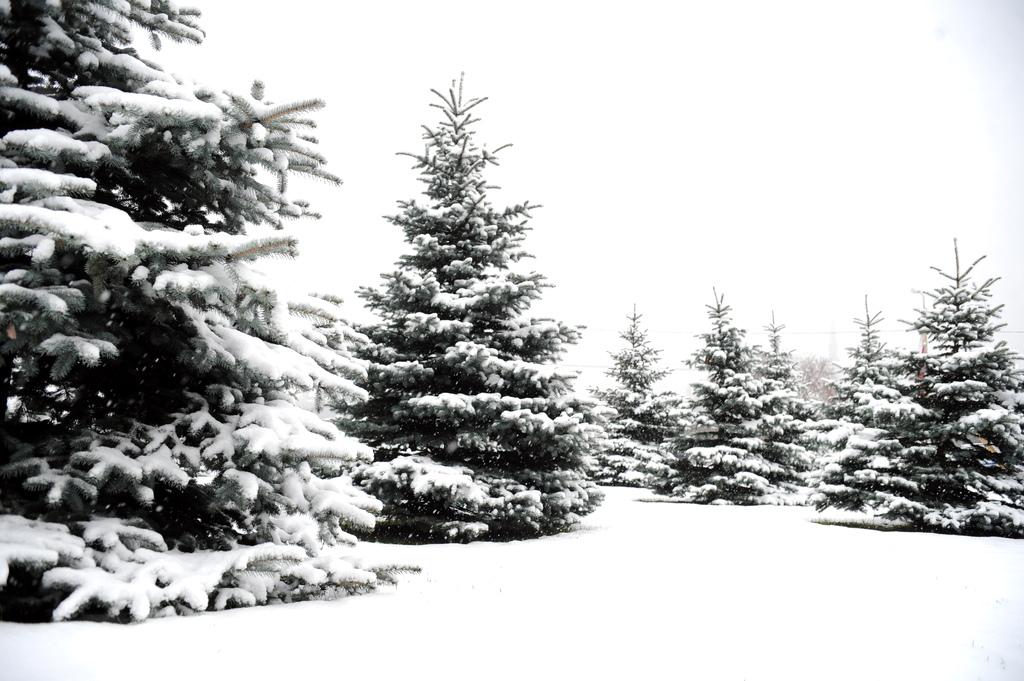 Больше всего снега лежит в Скривери